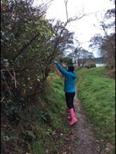 A volunteer trimming a tree overhanging a path