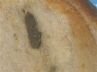 Food Safety Complaints - Bread